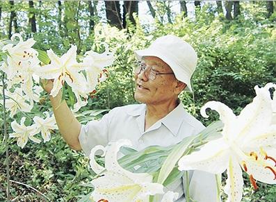 大輪の花を咲かせる「ヤマユリ」と「立野緑地山野草会」高橋会長(7月16日撮影)/タウンニュースより
