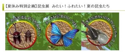 「昆虫展・みたい!ふれたい!夏の昆虫たち」あーすぷらざHPより