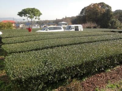 講習で訪れた南足柄市の茶畑