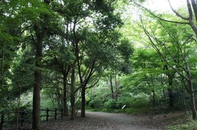 上郷森の家・横浜自然観察の森エリアの豊かな自然(横浜市栄区提供)
