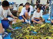 ヒマワリの種を取り出す子どもたち(朝日新聞デジタルより)