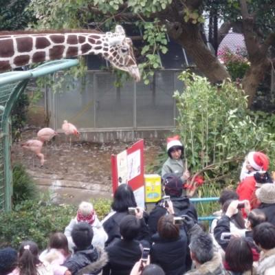 のげやまクリスマスの模様(横浜市立野毛山動物園 ホームページより)