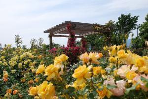 花菜ガーデン(県ホームページより)